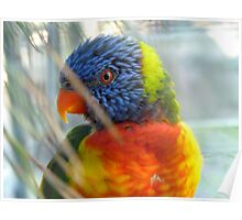 Do My Colours Influence Your Mood! - Rainbow Lorikeet - NZ Poster