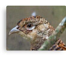 I See, Eye See You!! - Female Pheasant - NZ Canvas Print