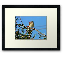 Today Is Your Lucky Day!!! - Grey Warbler - NZ Framed Print