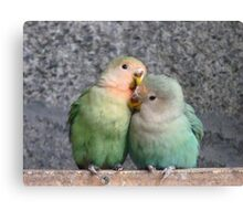 Excuse Me...This Is A Private Moment - Love Birds - NZ Canvas Print