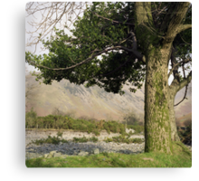 Holly Tree, Wasdale Canvas Print