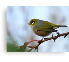 Oh.. Happy Days Are Here Again - Silver-Eye - NZ Canvas Print