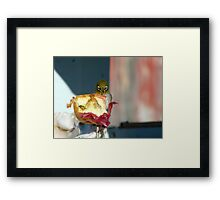 Aww..Wee!!! Your'e An Unwelcome Guest On My Apple! - Silver-Eye - NZ Framed Print