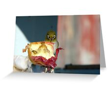 Aww..Wee!!! Your'e An Unwelcome Guest On My Apple! - Silver-Eye - NZ Greeting Card