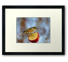 Look OUT..Silly Bee.. This Apple's Got No Brakes!!! -Silver-Eye - NZ Framed Print