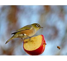 Look OUT..Silly Bee.. This Apple's Got No Brakes!!! -Silver-Eye - NZ Photographic Print