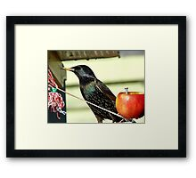 I Could Say I Always Look Bad In A Photo..But I Don't - Starling - NZ Framed Print
