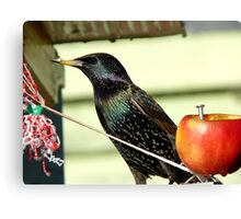 I Could Say I Always Look Bad In A Photo..But I Don't - Starling - NZ Canvas Print