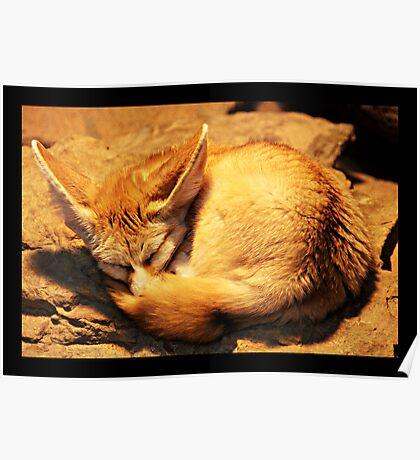 Sleeping fennec Poster