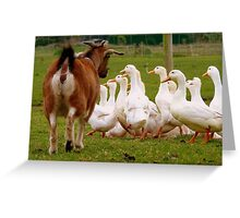 Come On Come On...I'd Like My Ducks In A Row!!! - Goat & Peking Ducks - NZ Greeting Card