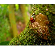 Your Tree, My Mountain Photographic Print