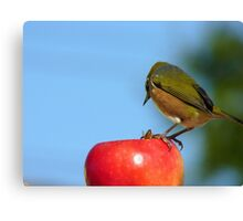 Yes..Yes!! I Know About The Birds & The Bees!!! - Silver-Eye - NZ Canvas Print