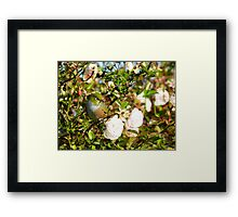 I'm As Beautiful As A Rose... Silver-Eye - NZ Framed Print