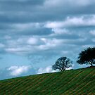 Two trees in a vineyard by Rachel Valley