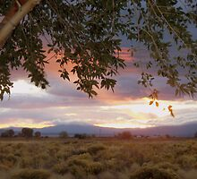 San Luis Valley at dawn by Jody Johnson