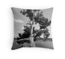 Tree Quartet II - The Gnarled Cypress Throw Pillow