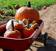 Fall Harvesting by Anna Williams