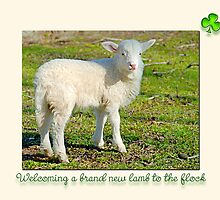 Welcoming a brand new lamb to the flock  by Bonnie T.  Barry