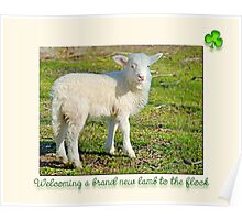 Welcoming a brand new lamb to the flock  Poster