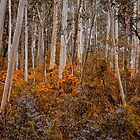 Colour My  World - Mount Wilson NSW -The HDR Experience by Philip Johnson