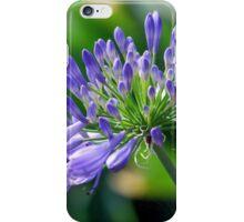 Agapanthus in Summer iPhone Case/Skin