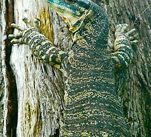 Gert the Goanna by Penny Smith