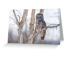 Great Grey Owl - Dunrobin Ontario Greeting Card