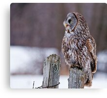 Great Grey Owl - Dunrobin, Ontario Canvas Print