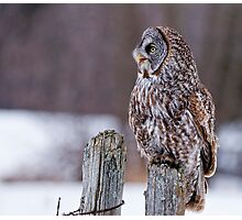 Great Grey Owl - Dunrobin, Ontario Photographic Print
