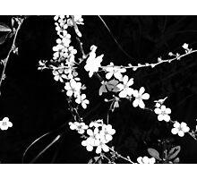 Flowering Hedge Photographic Print