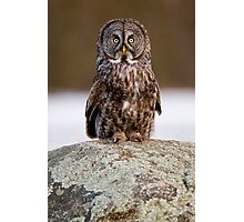 Great Grey Owl - Dunrobin Ontario Photographic Print