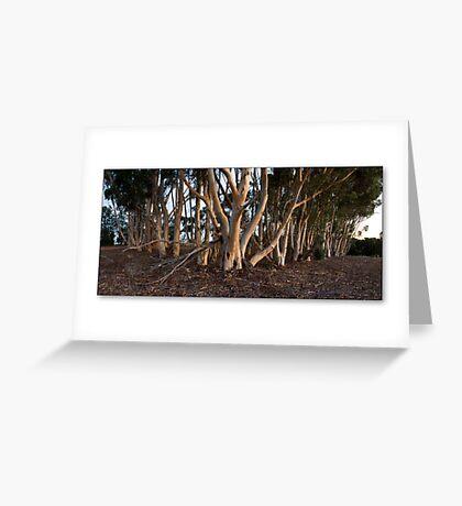 plantation Greeting Card