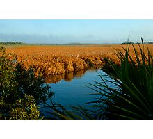 """Everglades Morning"" Photographic Print"