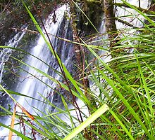 Hogarth Falls, Strahan - west coast of Tasmania by gaylene