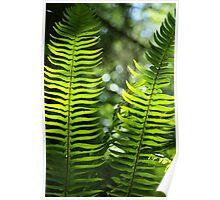 Fern Foliage  Poster