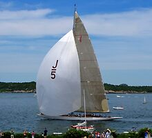 """Ranger"" Sails In Newport by Nancy Richard"