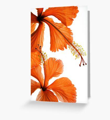 Hibiscus Falling Greeting Card