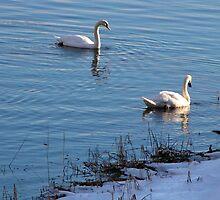 Mating Pair by Nancy Richard