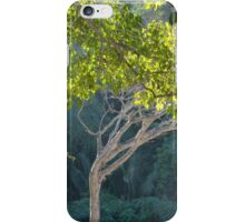 morning light in the jungle - luz de la mañana en la selva iPhone Case/Skin