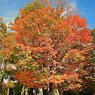 Glorious Fall by Nancy Richard