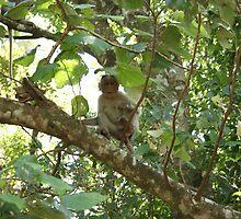 monkey by snsabarinath