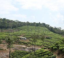 tea estate by snsabarinath