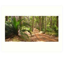 bush track Art Print