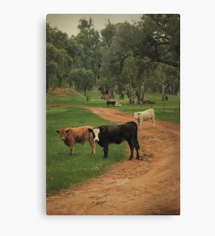 Winnejup Cows Canvas Print