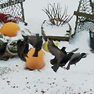 Winter Ballet on 60N by NordicBlackbird
