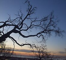 tree at sundown by Niiso