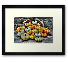 Mini Pumpkin Harvest Framed Print