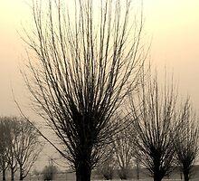 Winter mood by TriciaDanby