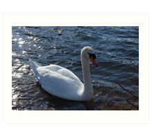 Swan At The River Art Print