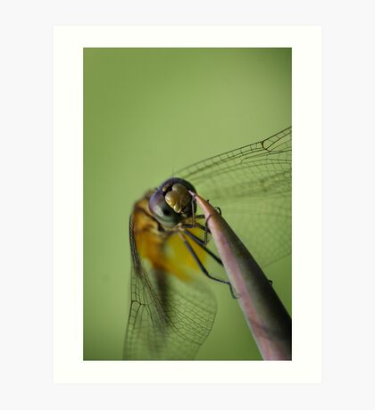 Dragonfly hanging on in the wind Art Print